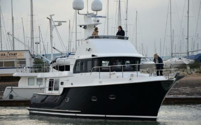 N43-Black-Swan-2